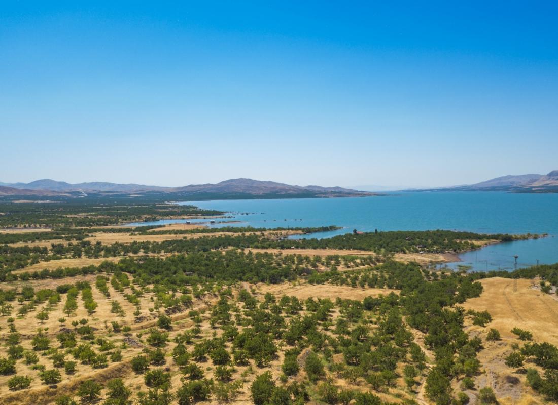 Vista delle coltivazioni di albicocche sulle rive del fiume Eufrate – Malatya, Turchia