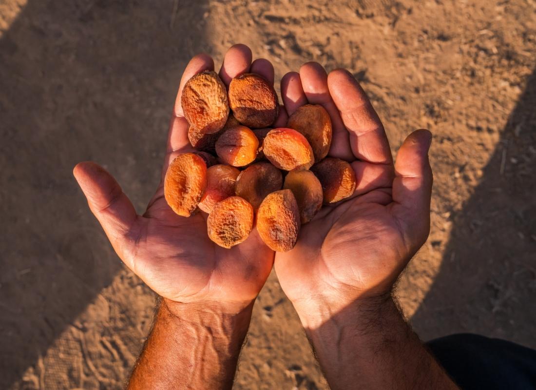 Le mani di un contadino – Malatya, Turchia