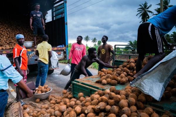 Coconut Farmer / Euro Company