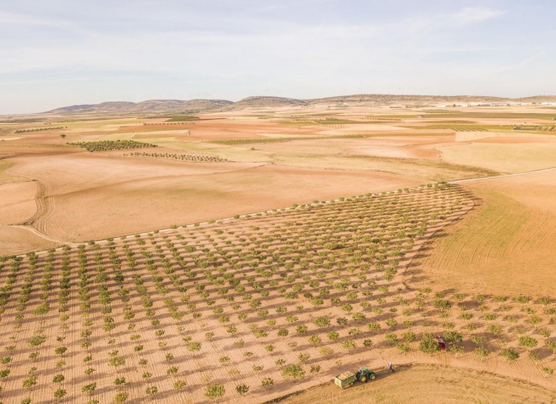 I campi di pistacchi nel deserto. – Castilla de la Macha, Spagna