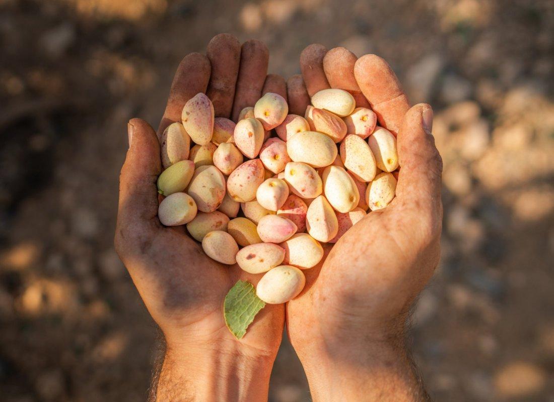 Le mani di un contadino. – Pozuelo de Calatrava, Spagna