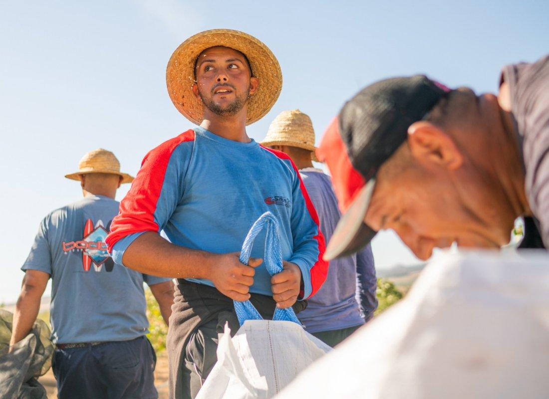 I pistacchi vengono disposti all'interno di sacchi per poi essere trasportati. – Pozuelo de Calatrava, Spagna