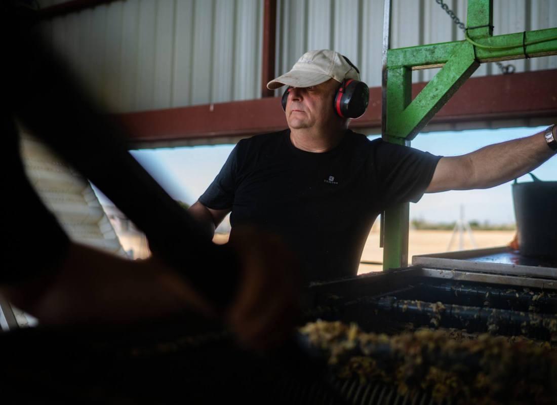 Arrivati nell'azienda i pistacchi iniziano la lavorazione. – Pozuelo de Calatrava, Spagna