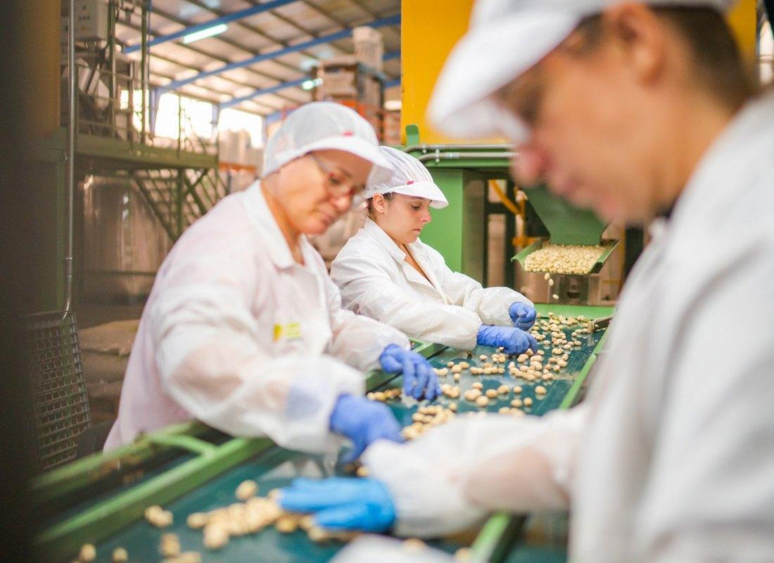 Alcuni operatrici in azienda fanno la selezione dei pistacchi. – Castilla de la Mancha, Spagna