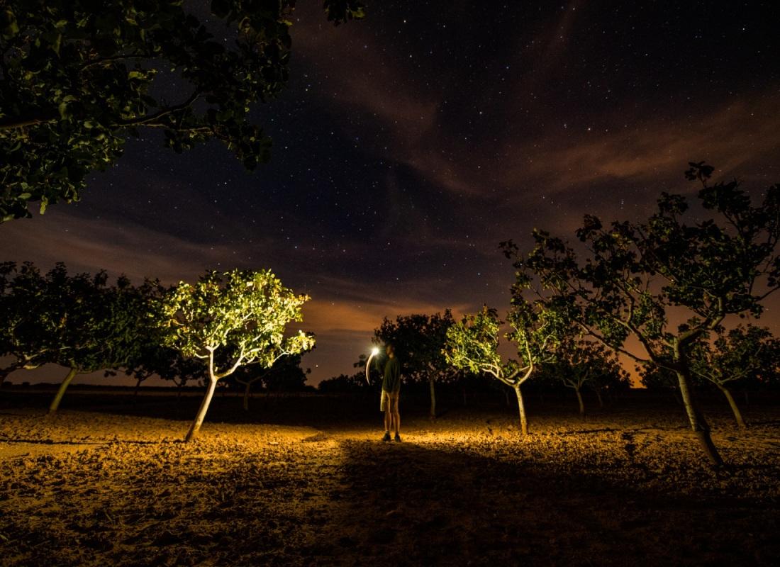 La notte con la sua forte escursione termica di queste zone conferisce al pistacchio un sapore unico. – Castilla de la Mancha, Spagna