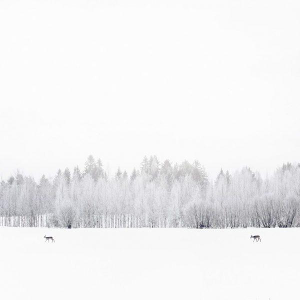 05_Caprioli_Finlandia-Orientale-1024x1024
