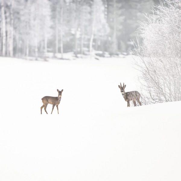 08_Caprioli_Finlandia-Orientale-1024x1024